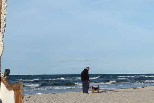 Hund am Ostseestrand mit Herrchen