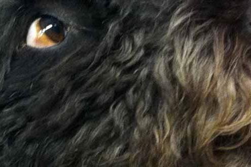 Hundegesicht im Detail