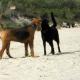 Ostsee mit Hund Hundetreffen am Strand