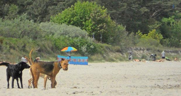 Rügen Hunde am Sandstrand