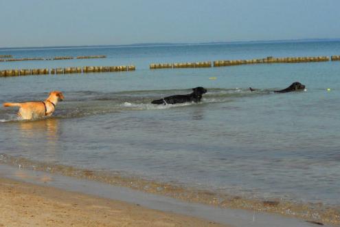 Hunde auf Rügen in der Ostsee