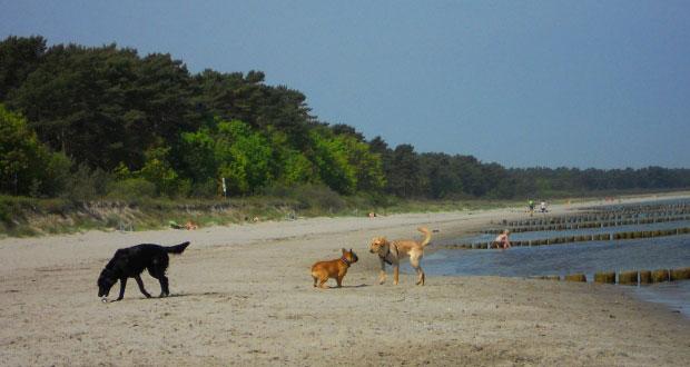 Usedsom mit Hund am Ostseestrand